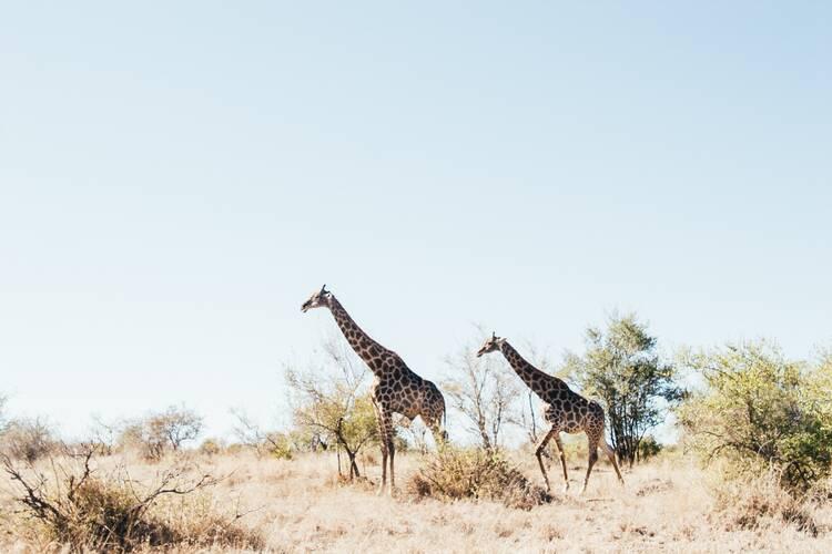 Afkickkliniek Zuid Afrika